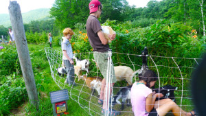 goats and 'kids'