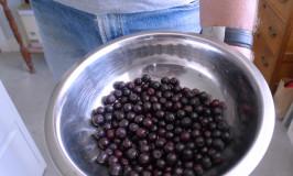 superfood, aronia berries growing at Katywil producing nutritious berries