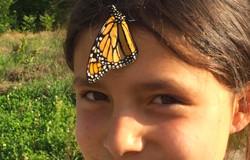 monarch butterfly in western mass