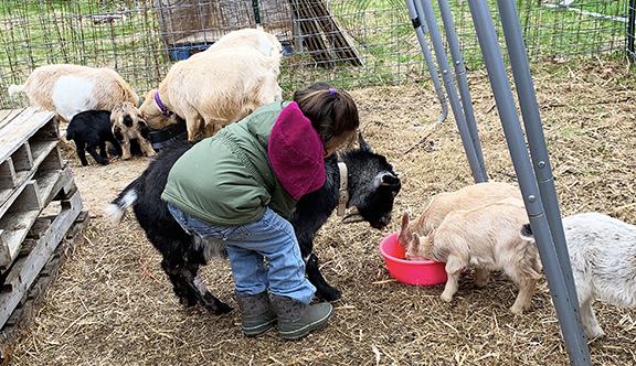 June is Loving Clover, Stowe Farm Community's beloved mama goat