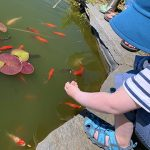 Arlo feeding fish at Stowe Farm