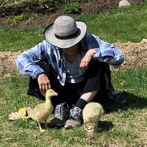 Lynn with goslings at Stowe Farm