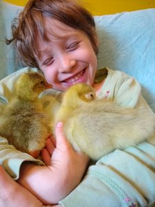 Nelle with newly hatched goslings