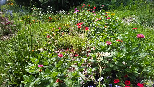 Butterfly Garden at Stowe Farm
