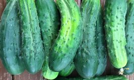 Stowe Farm cucumbers to pickle