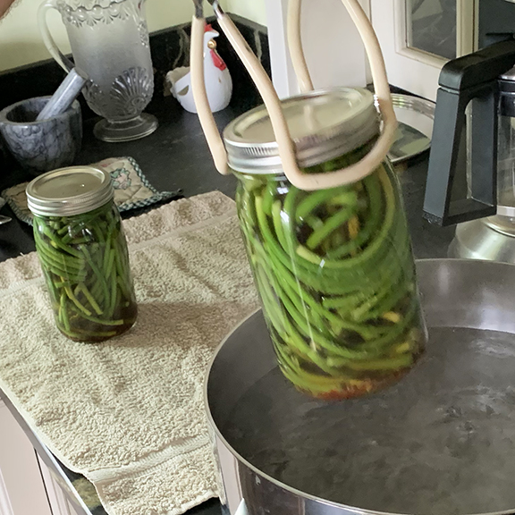 pickling garlic scapes at Stowe Farm