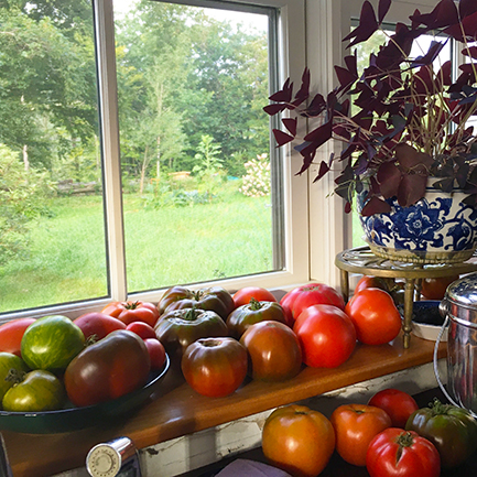Abundance of tomatoes at Stowe Farm