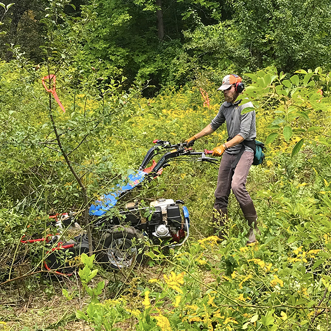 Jonathan starting Stowe Farm mowing effort in Solar Field