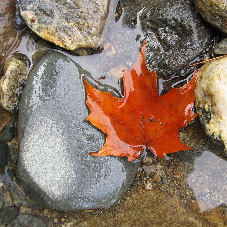 Mason Willard StormBringer Photography cropped Leaf&Stone