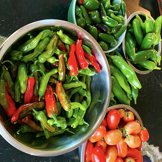 shishito and other peppers from the garden