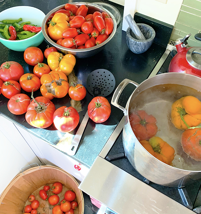 The last of the tomatoes picked