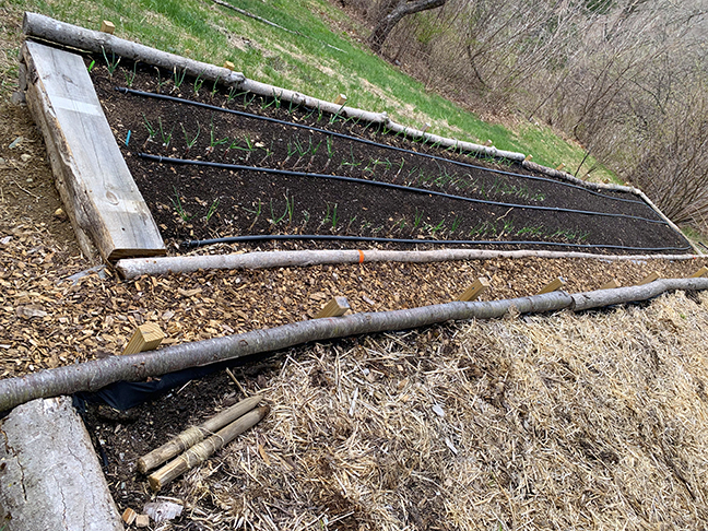 installing drip system at Stowe Farm