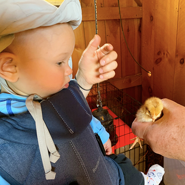 Baby humans, chicks, ducks, & goats at Stowe Farm