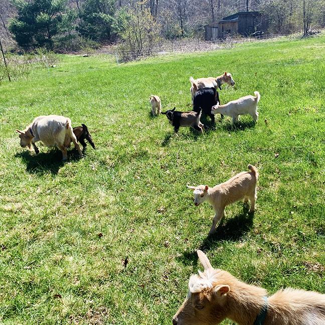new kids at Stowe Farm
