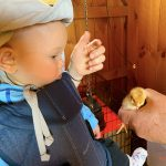 Stowe Farm baby chicks and humans